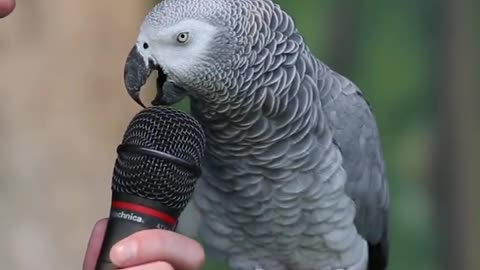 parrot talking & mimicking other animals