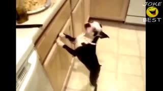 Funny Dog Video Compilation 2021