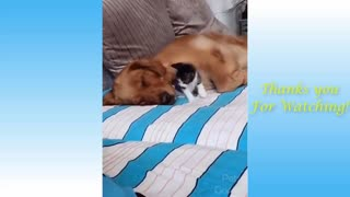Cute Pets & Funny Animals Compilation
