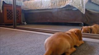 dog looking at mirror
