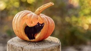 Black Kitten Preparing For First Halloween Party
