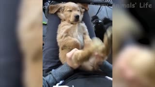 Funny Animal video cat and dog part 5