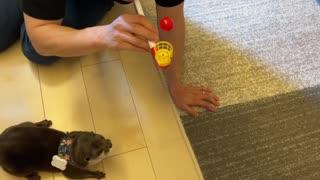 Cute walking otter like a baby