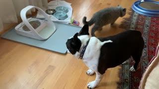 Modern Cat Food Bowl Keeps Dog Out