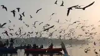 A group of birds migrate for pain