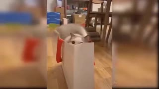 Cat jumping into the bag.