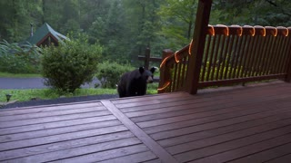 Man Scares Bear Back From Porch