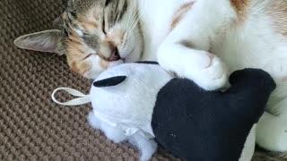 Cat Catches A Cat Nap