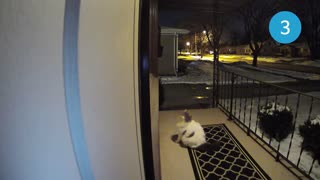 Watch What Happens When This Cat Tries to Get in a Window