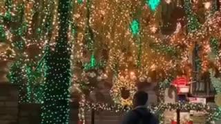 Dog Sees Christmas Lights