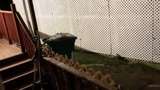 Bear Family Plays in Trash Can and Pool