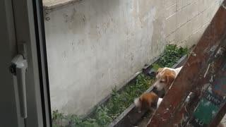 Beagle Bounces for Bread