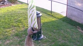 Squirrel Proof bird feeder that works