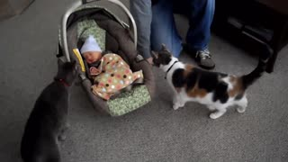 Cats Meeting Babies FIRST Time