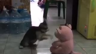 Funny cat times, fighting, jumping, and dancing