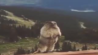 screaming squirrel