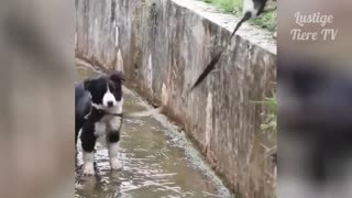 Super Cute Cats and Dogs in earth!!