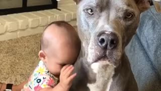 Baby sister giving puppy kisses
