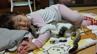 Sleeping daughter. Don't wake up Children Kids Cat Cat