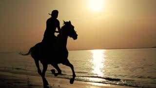 Arabian Stallion Silhouette on the Beach