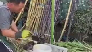 Worker Skills Videos