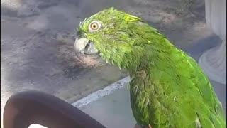 A cute parrot recite Holy Quran fluently