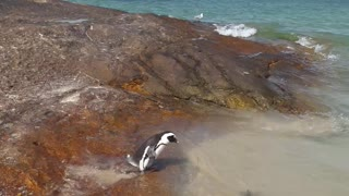 Cute Penguin playing at beach