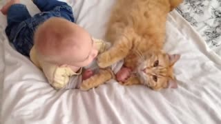 Funny Cats Meeting Babies for the FIRST Time