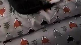 Kitty smells steak