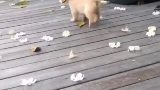 Playing with my dog and flowers