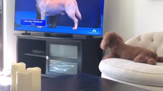 Football for puppies
