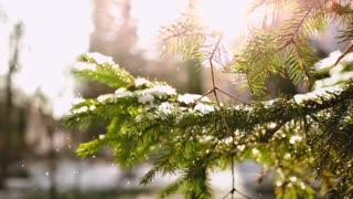winter, snow, snowfall, snowing, snow background