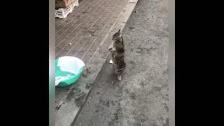 Funny Cat videos ; cat catching fish