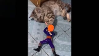 funny videos about animals, try to do not laugh