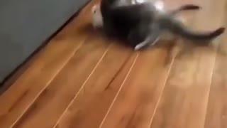 ninja cat executing an attack