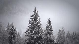 Snowfall winter snow cold