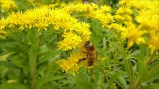 Nectar of flowers