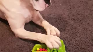 Doggo Plays a Game of Hungry Hungry Hippos