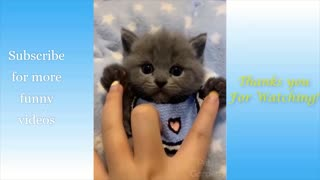 Cute and Funny Cat Compilation Viral Video