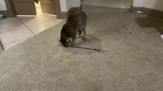 Self-Sufficient Cat