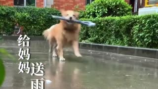 AMAZING INTERLIGENT DOG