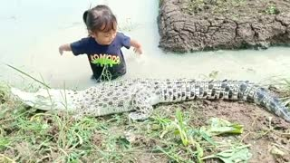 Little girl plays with crocodile on the rice field irrigation
