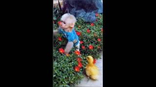 Love vs friendship between cute monkey and duck