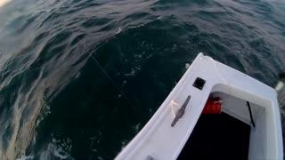 Shark Circles Fishing Boat