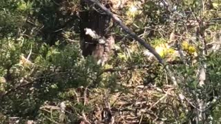 Gigantic Snake Slithers Way Up Tree