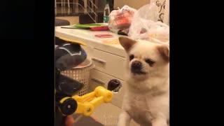 Animals Vs toys