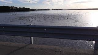 Scaredy Ducks