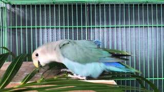 Parrot bird with beautiful colors