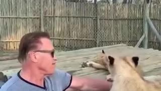 Arnold Schwarzenegger Plays With Lions