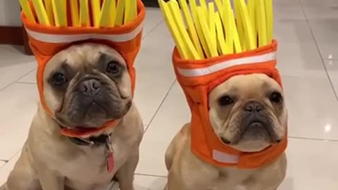 """'Frenchie Fries"""" Halloween costume is simply the best"""